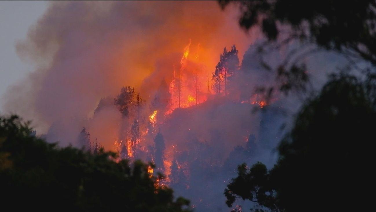 El fuego del incendio de Gran Canaria entra en el Parque Natural de Tamadaba