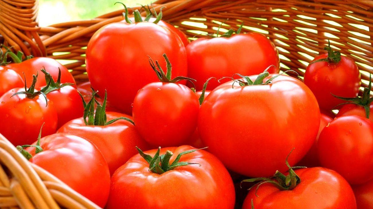 Colmenar Viejo elige el mejor tomate