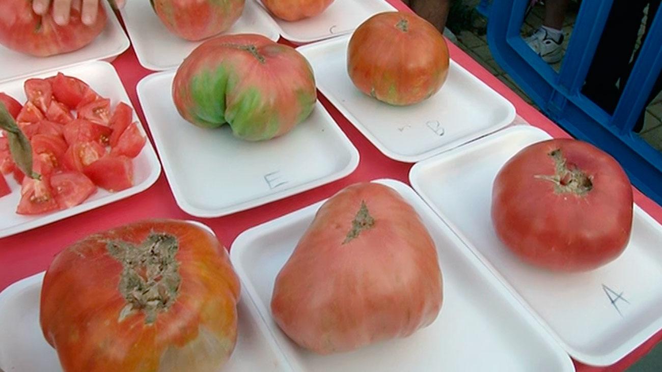 Colmenar Viejo celebran su tradicional concurso de tomates
