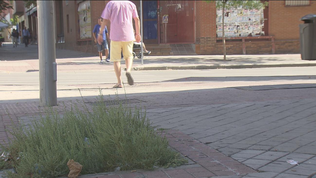 Madrid comienza a eliminar los 3000 alcorques vacíos de la capital