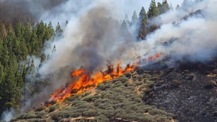 Extinguido el primero de los tres incendios declarados en Gran Canaria