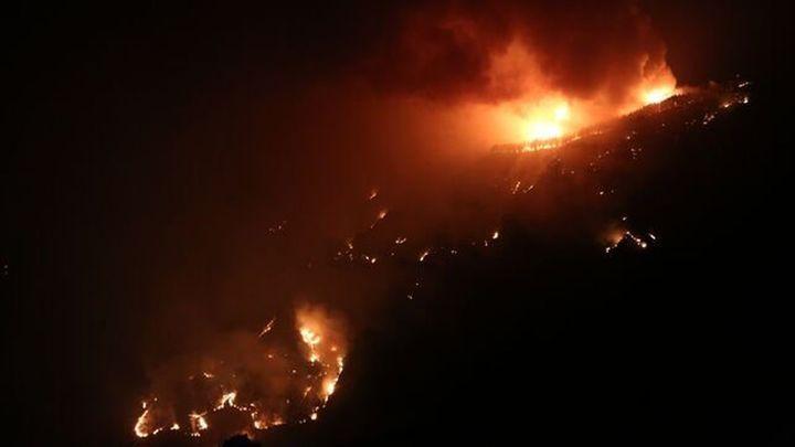 Los efectos de los incendios sobre la fauna