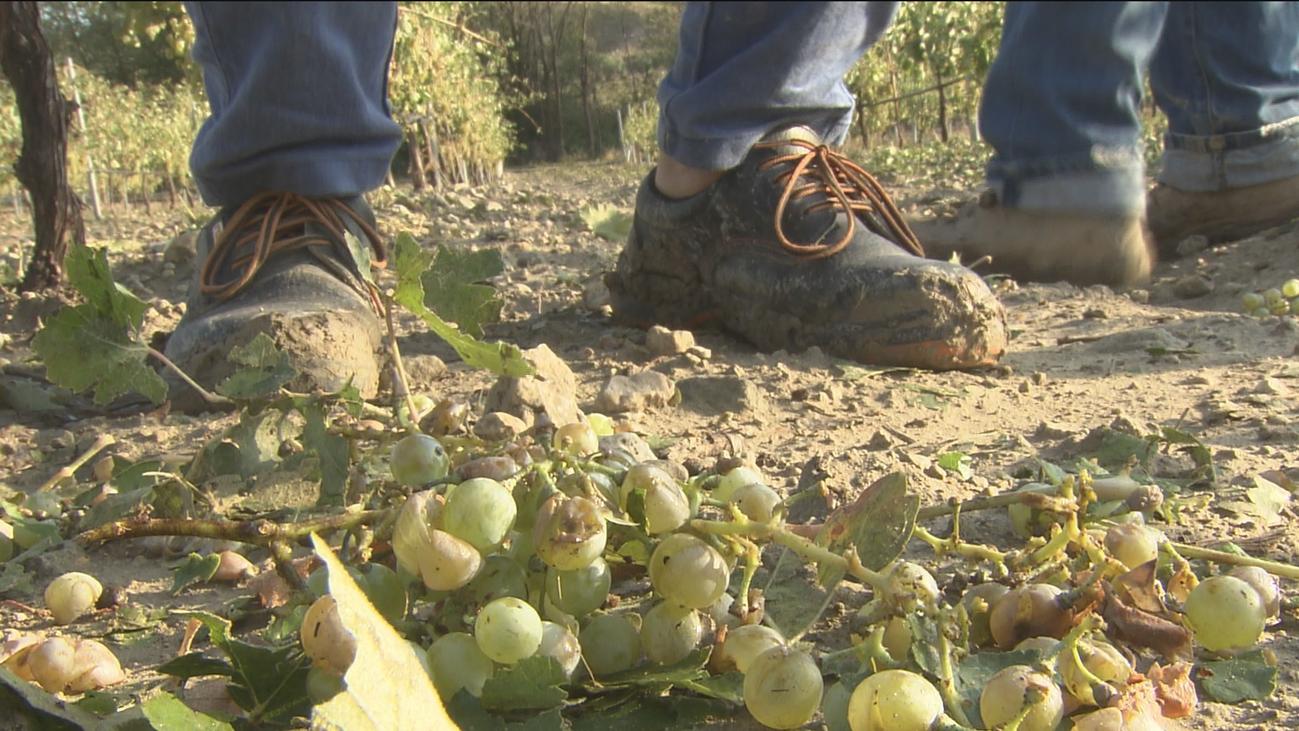 El granizo destroza en Arganda un 90% de la cosecha de aceituna y un 75% de la de uva