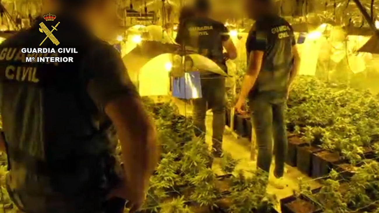 Casi 3.000  plantas de marihuana intervenidas en Andalucía