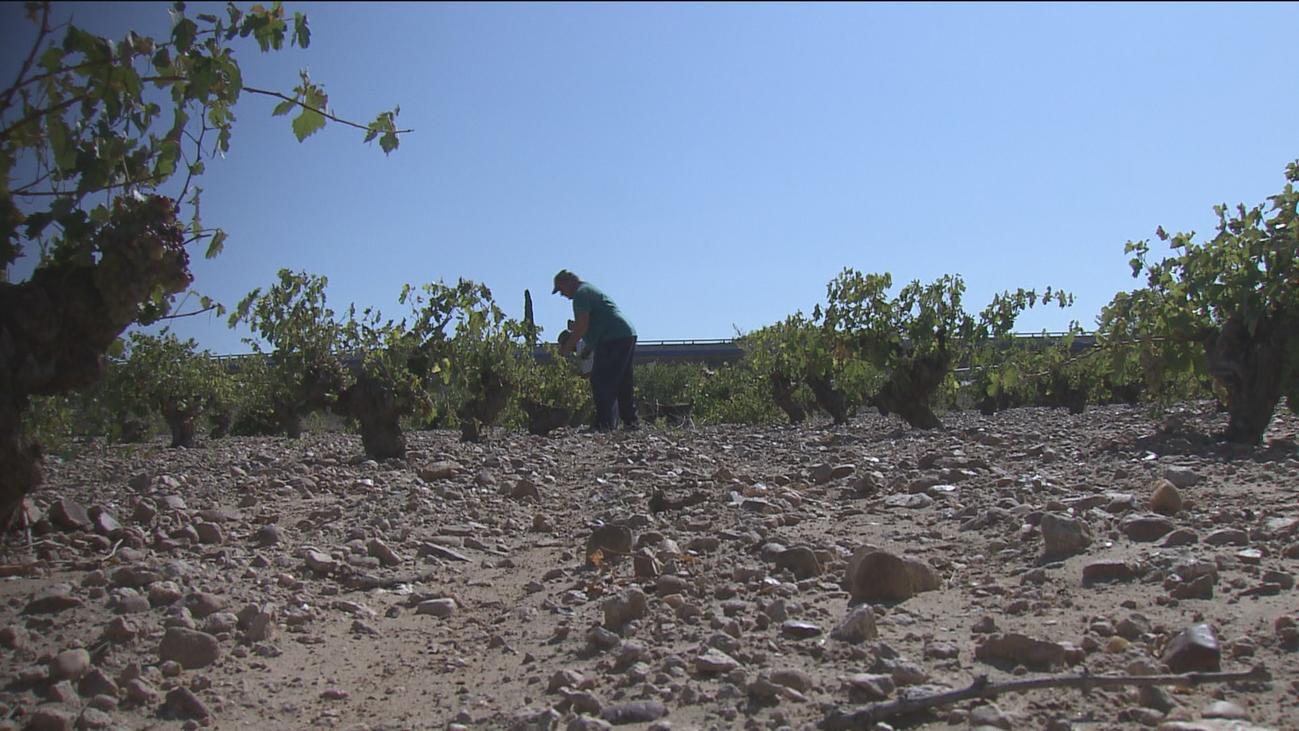 Al menos un 65% de producción de uva perdida en Arganda por el granizo