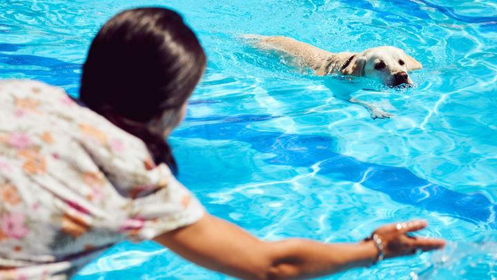 Los perros de Rivas se bañan en el primer chapuzón perruno