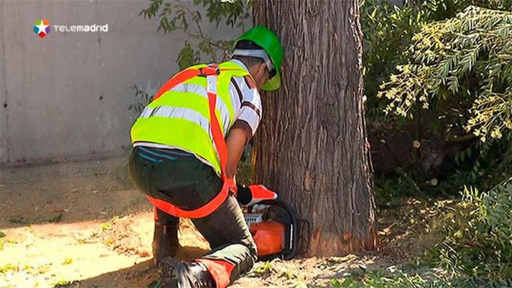 Las ONGs llaman a plantar y regar un árbol en Madrid tras el desastre de la  Amazonia