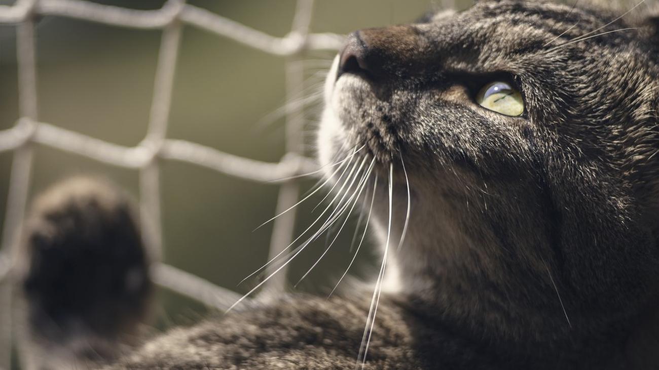 Defender los derechos de los animales a golpe de click