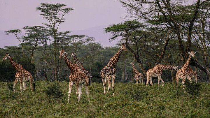 ¿Cómo trabaja una madrileña en Kenia?