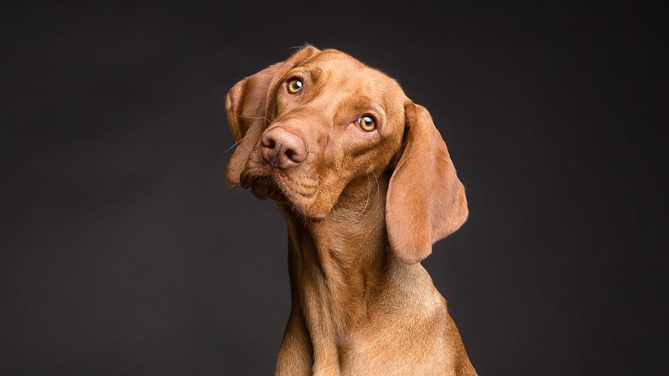 Las guarderías en Madrid que cuidarán de tu perro