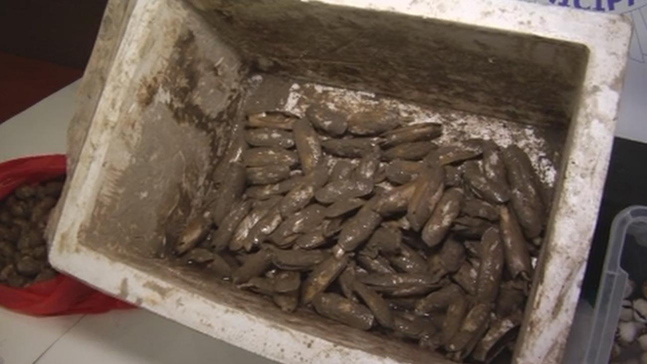 Pillados sirviendo dátiles de mar, especie protegida, en un restaurante de Usera