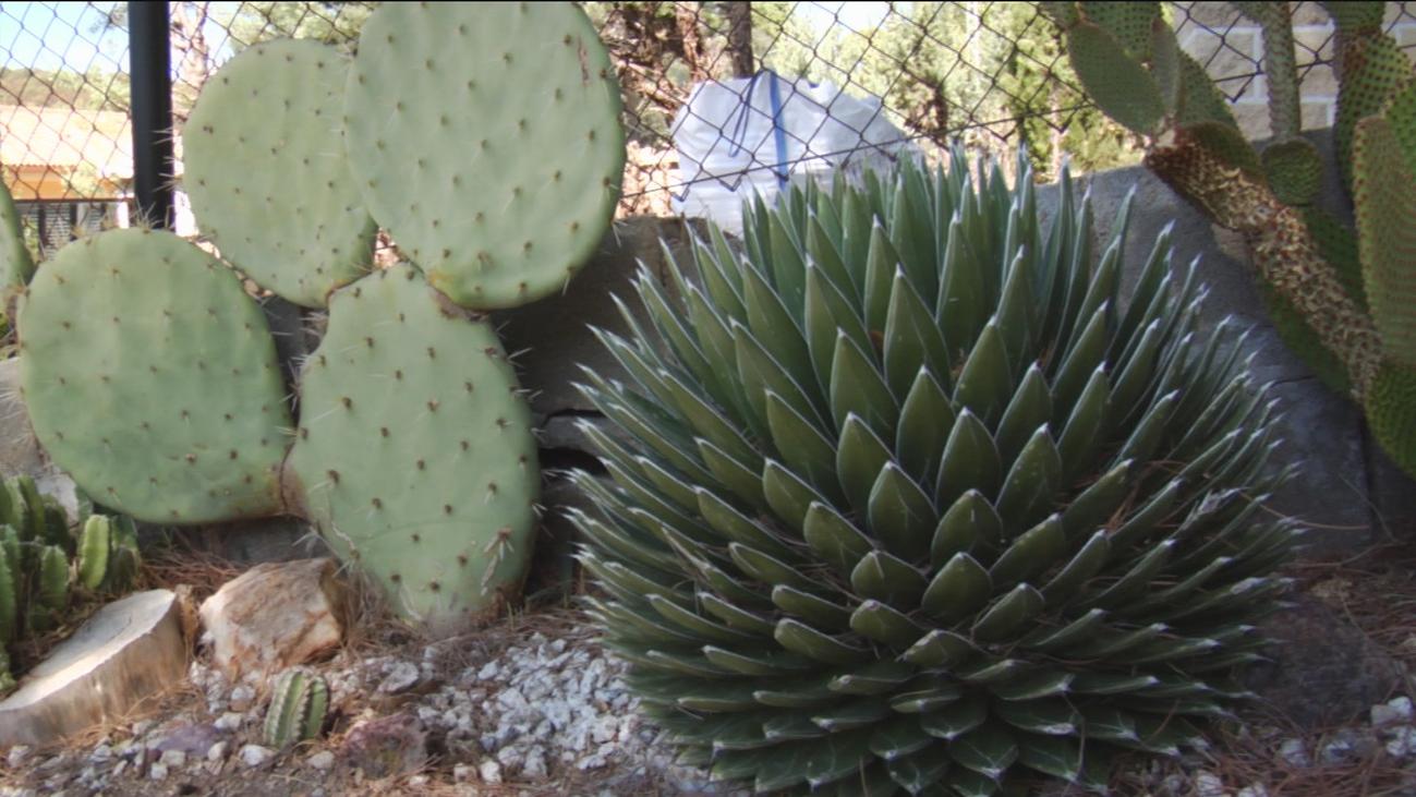 La curiosa afición de un vecino de Villa del Prado por los cactus