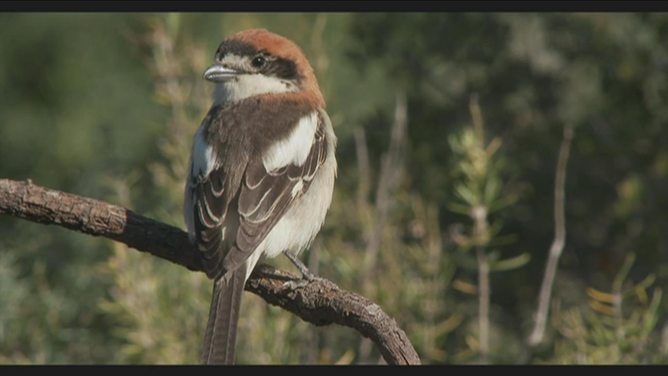 Hasta 3.000 millones de pájaros menos debido al cambio climático