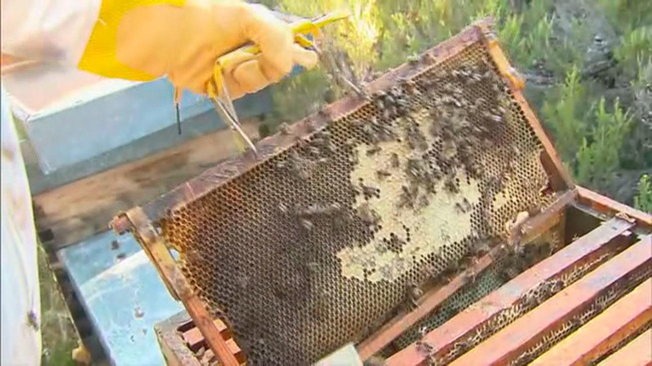 La producción de miel de Madrid se desploma