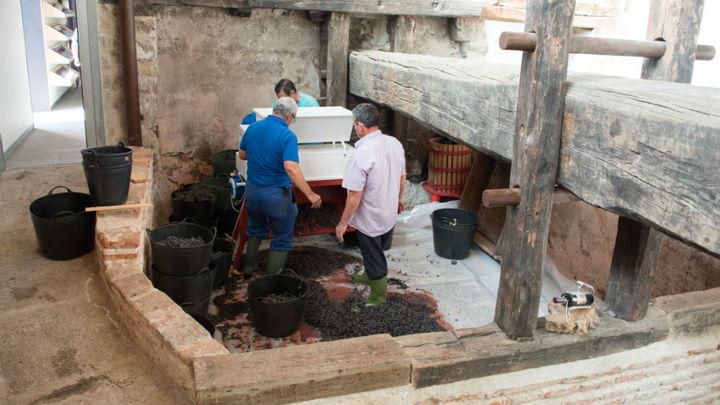 Colmenar Viejo rememora la vendimia tradicional con dos jornadas en sus viñedos