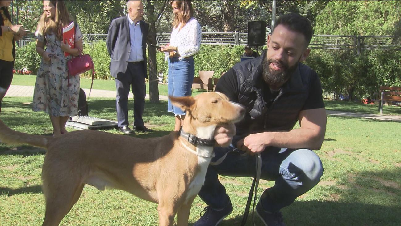 Se buscan en El Retiro familias para adoptar mascotas