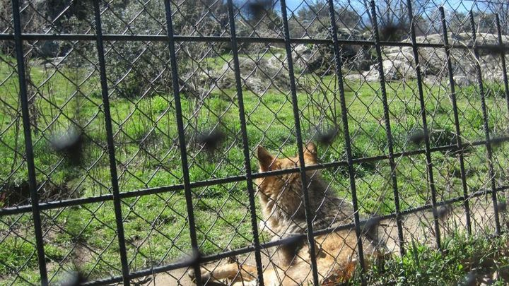 Visitamos el Centro de Recuperación de Animales en Villanueva de la Cañada