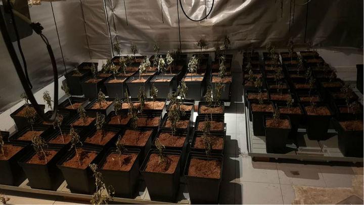 Detenido en Fuencarral tras descubrirse que tenía una plantación de marihuana en su trastero