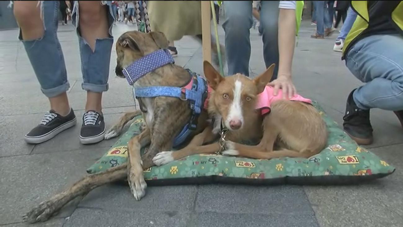 Estos perros buscan una segunda oportunidad