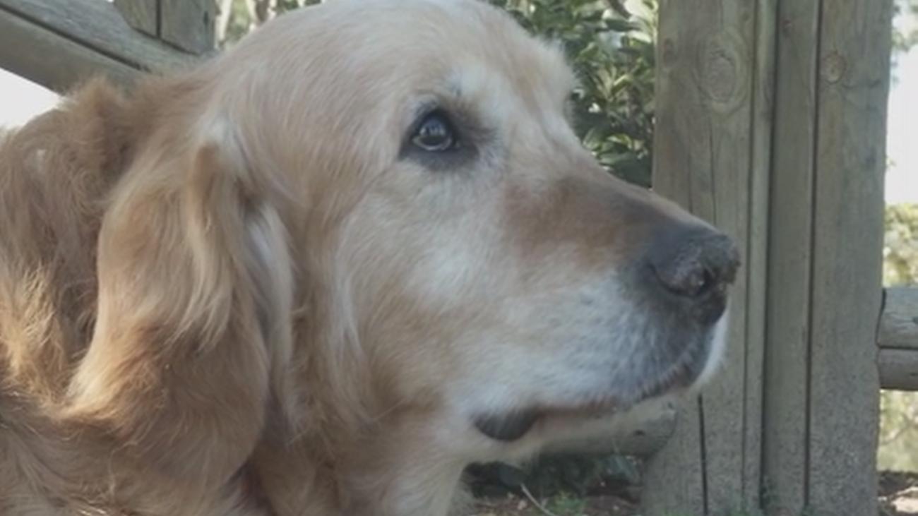 ¿Quién está envenenando a perros en Móstoles?