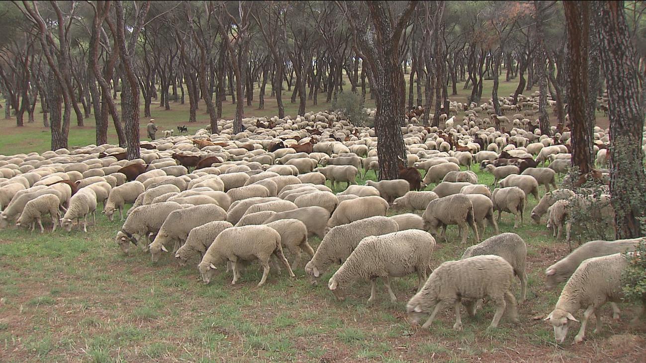 Pequeños y mayores, pastores por un día