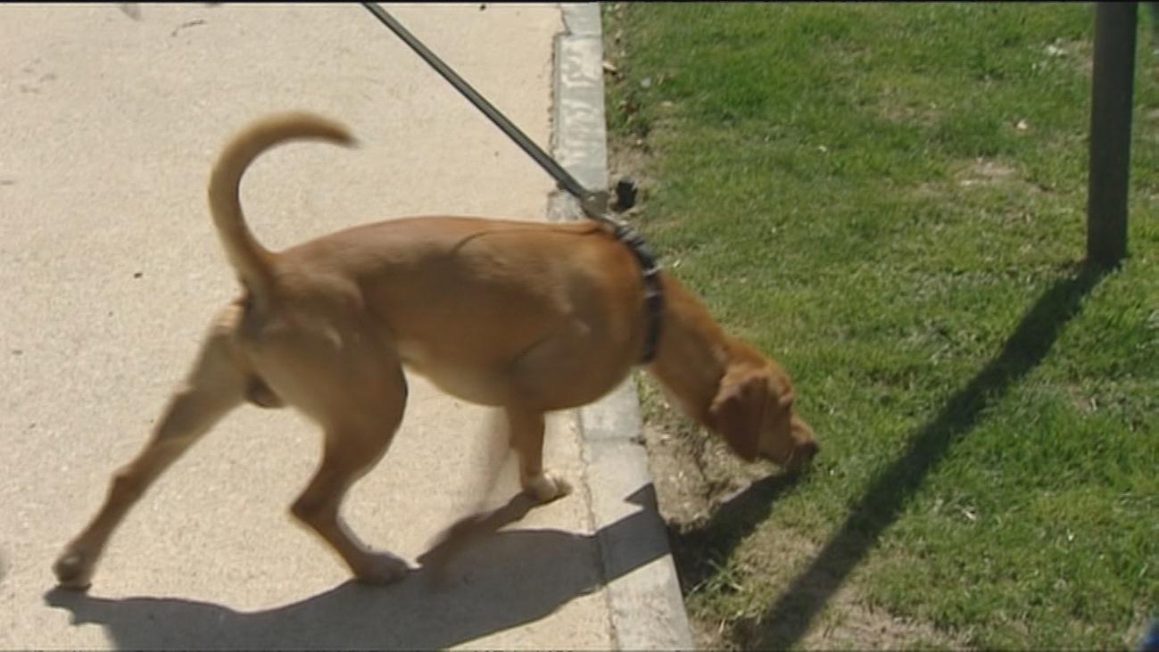 Cinco perros muertos en San Sebastián de los Reyes envenenados con anticongelante