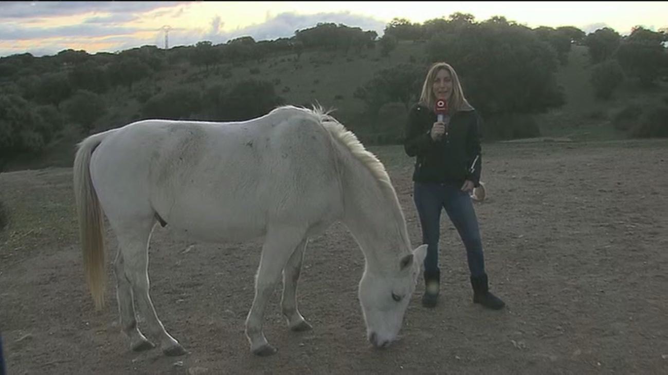 Guadalix de la Sierra:  Keko y otros 20 caballos buscan dueño