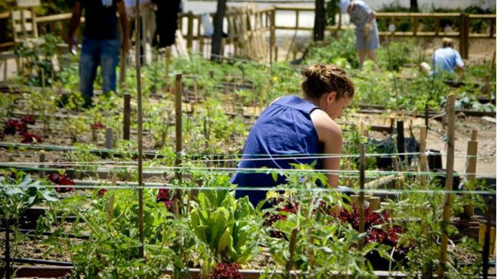 Fuenlabrada pone a disposición de sus vecinos hasta 70 huertos urbanos