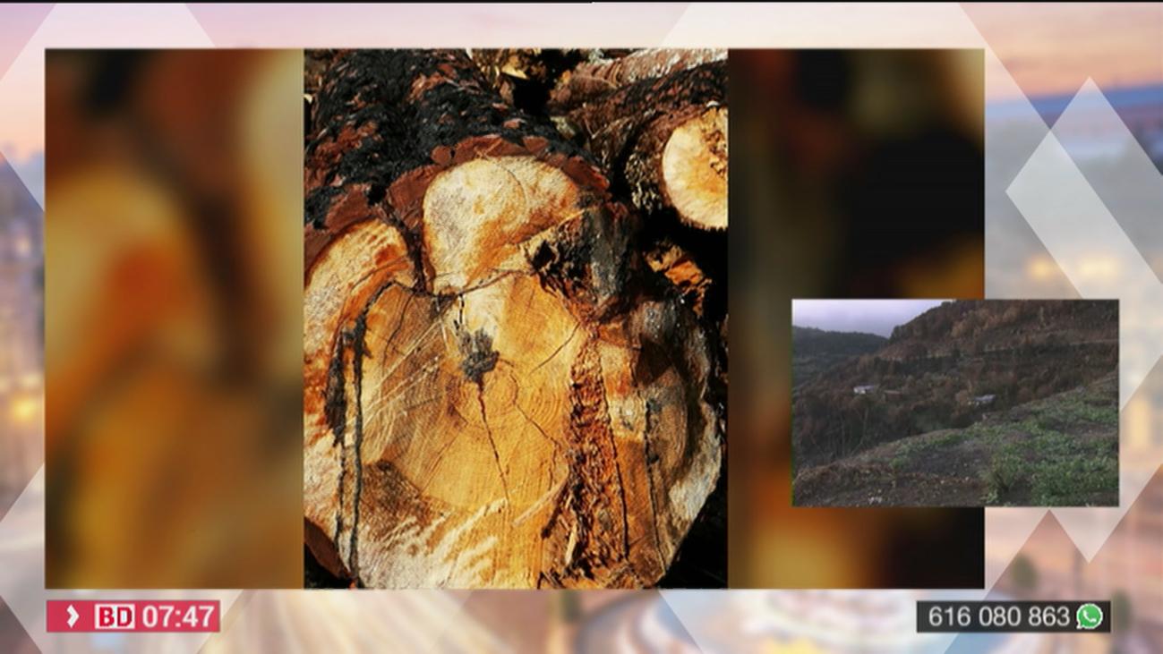 Los vecinos de Cenicientos denuncian una tala masiva de árboles