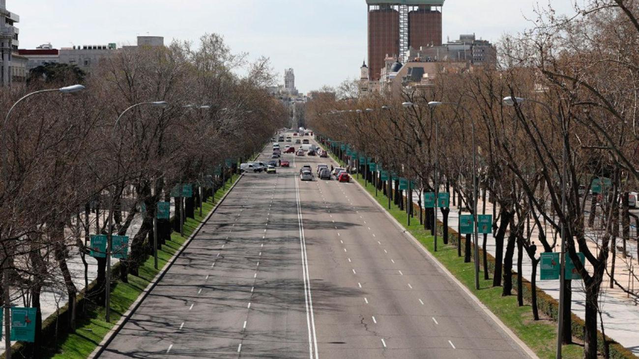 Árboles en el Paseo de la Castellana de Madrid