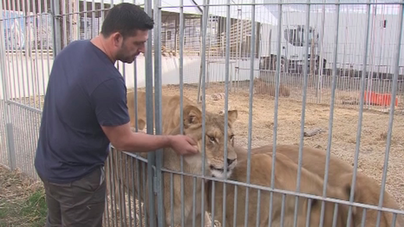 El circo llevará al Ayuntamiento de Madrid a los tribunales por prohibir los espectáculos con animales