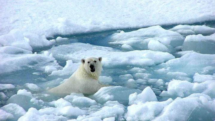 Más especies en peligro de extinción por el cambio climático