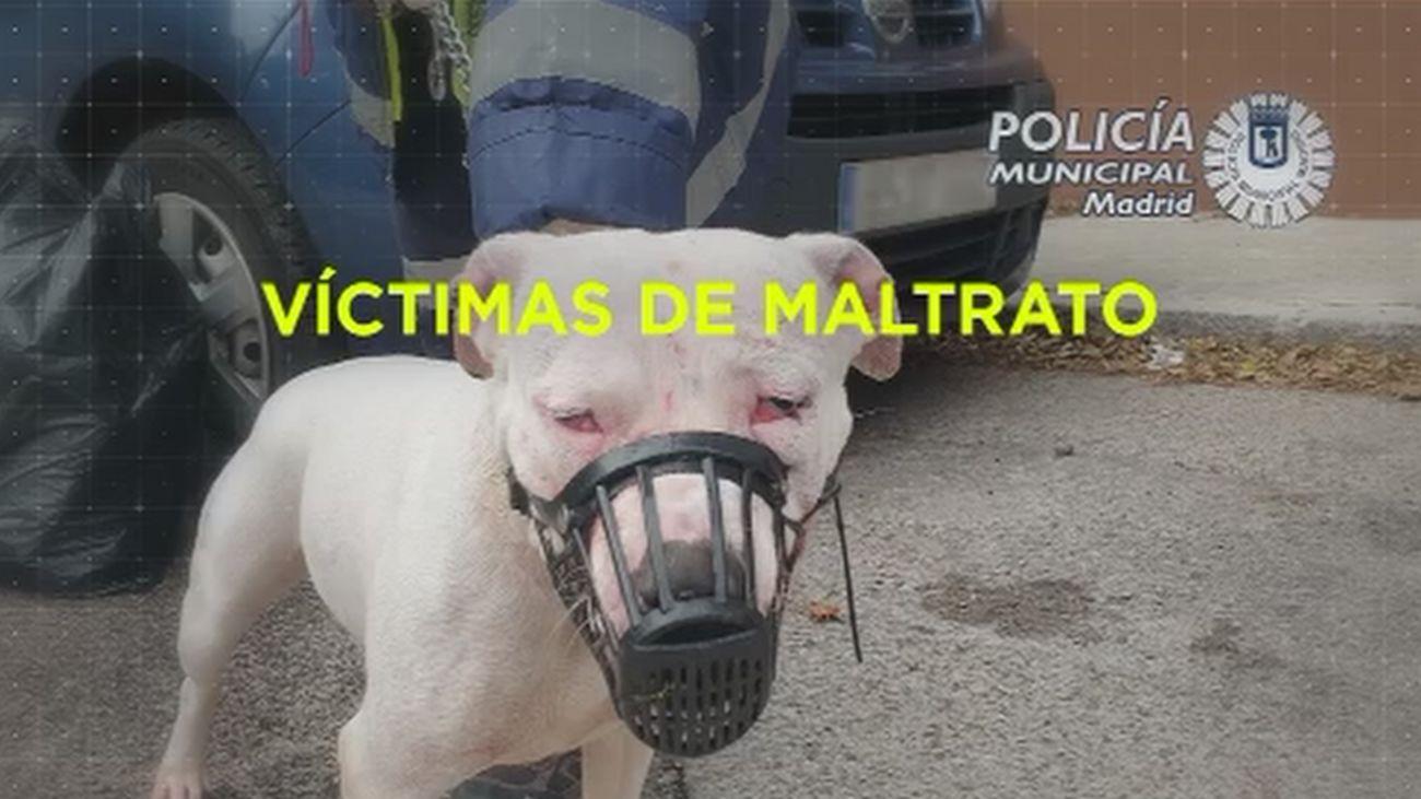 Madrid Directo 20.11.2019