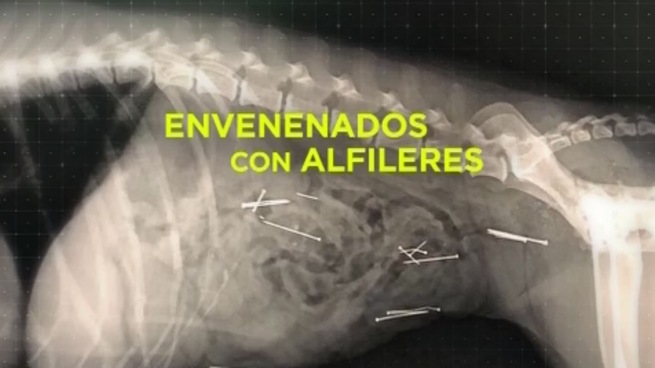 Madrid Directo 21.11.2019