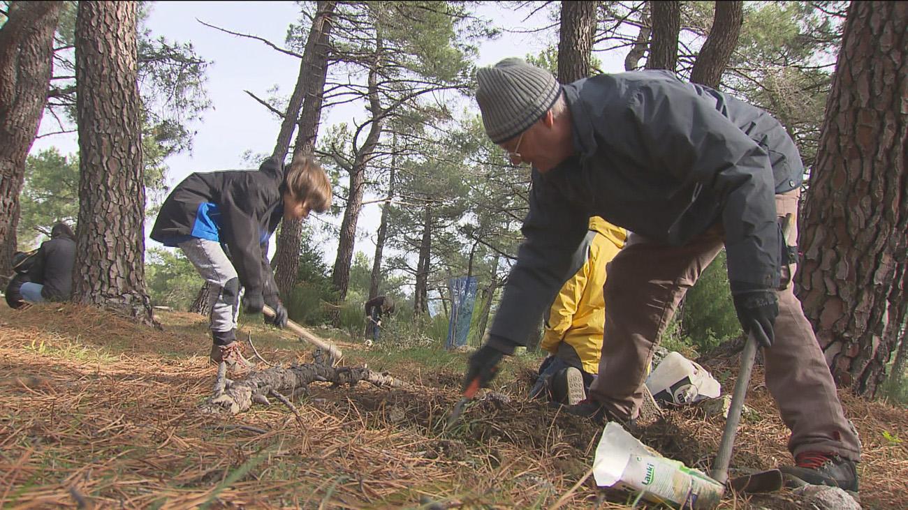 Vecinos y ecologistas reforestan con semillas autóctonas el monte Abantos