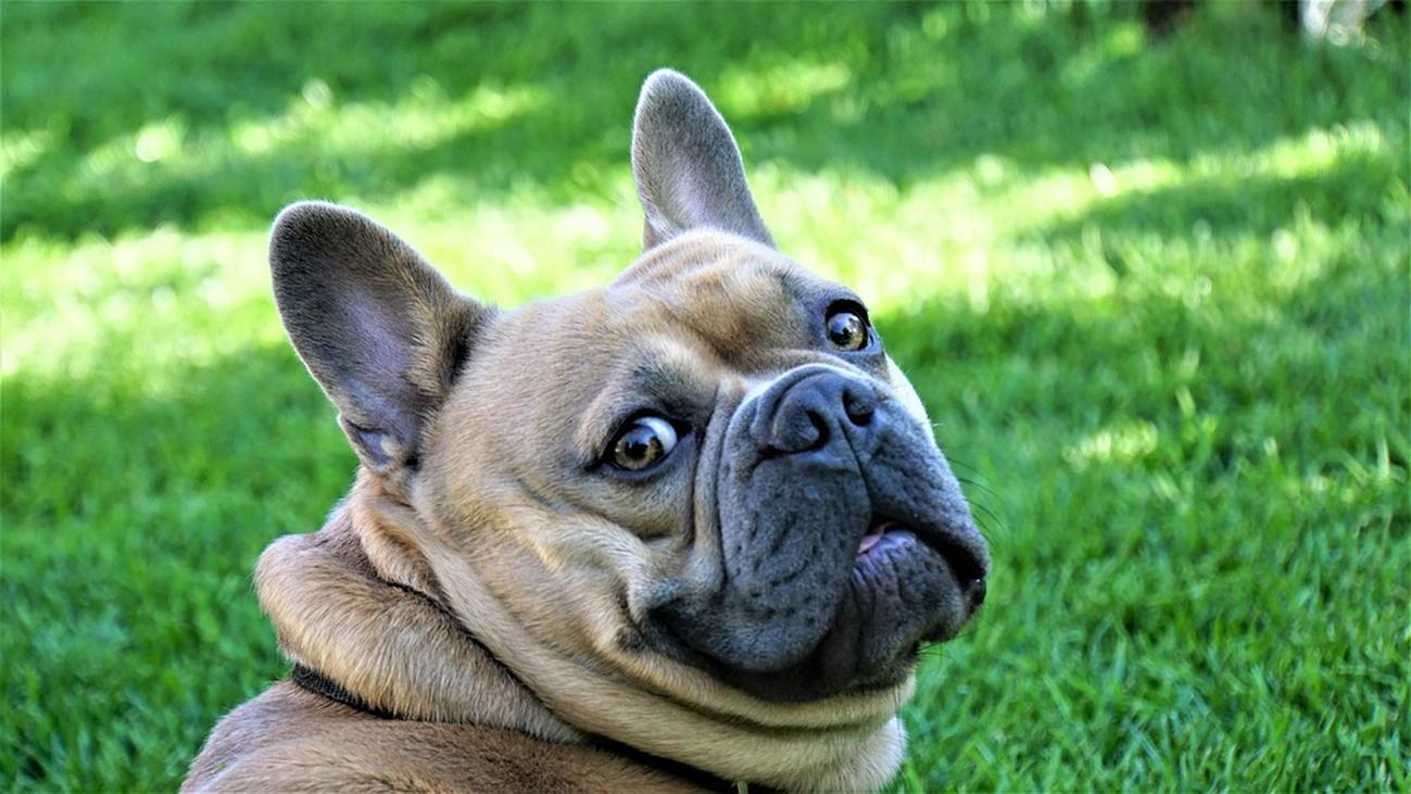 ¿Es posible convivir con una mascota si tienes alergia?
