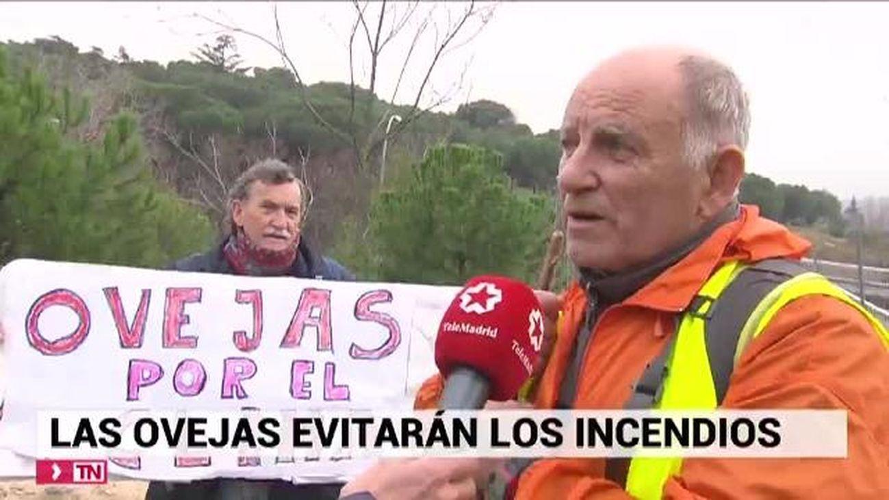 Telenoticias Fin de Semana 08.12.2019