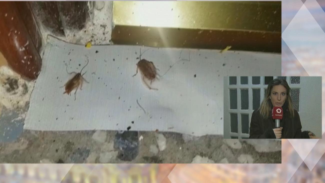 Invasión de cucarachas en un bloque de Parla