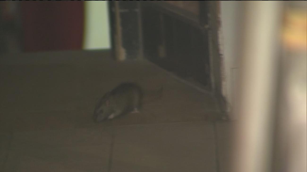 La pizzería de calle Príncipe invadida por las ratas no tiene licencia de actividad
