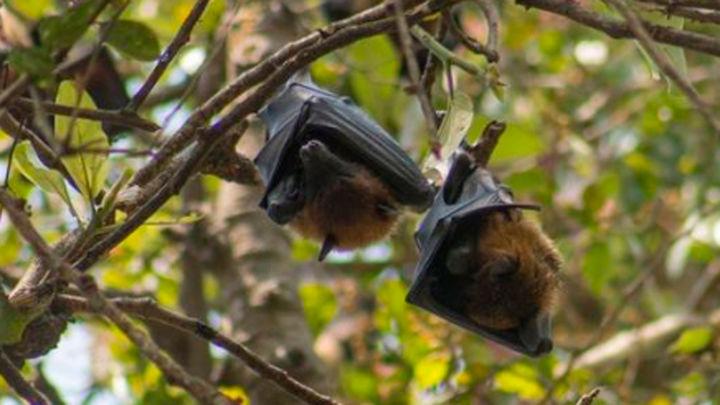 Los murciélagos madrileños prefieren vivir en los parques urbanos más grandes