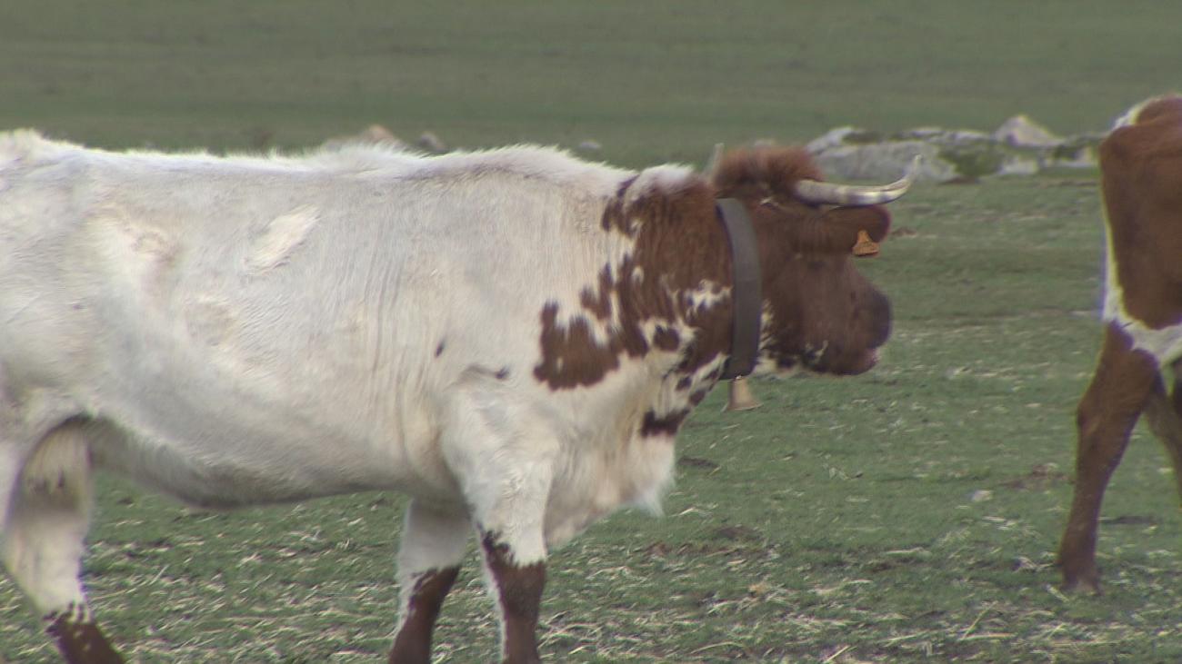 Los ganaderos madrileños plantan cara a la carne vegana