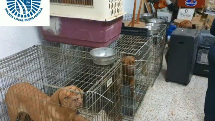 La Policía de Fuenlabrada rescata once perros en un establecimiento comercial