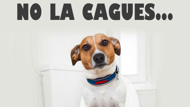 Móstoles lanza una campaña para concienciar sobre la recogida de excrementos caninos