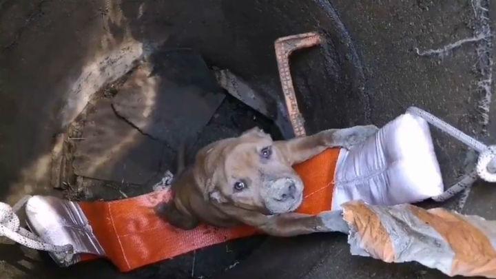 Bomberos de  Fuenlabrada rescatan a un perro que se había caído a un pozo