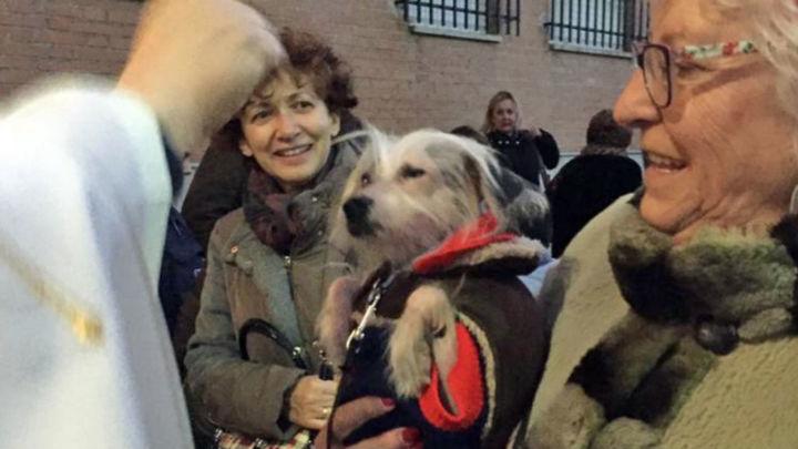 Las mascotas de Colmenar Viejo reciben este viernes la bendición de San Antón