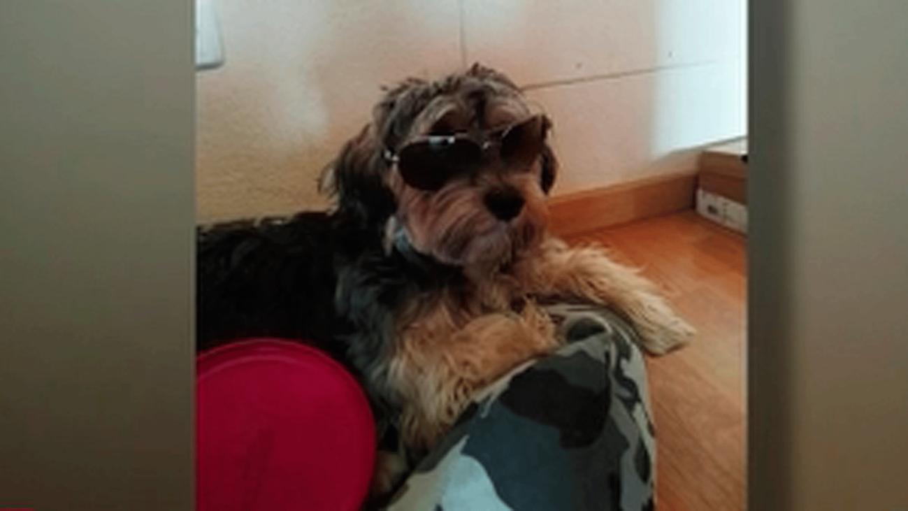 Dejó a su perro en una peluquería canina de Valdemoro y murió atropellado