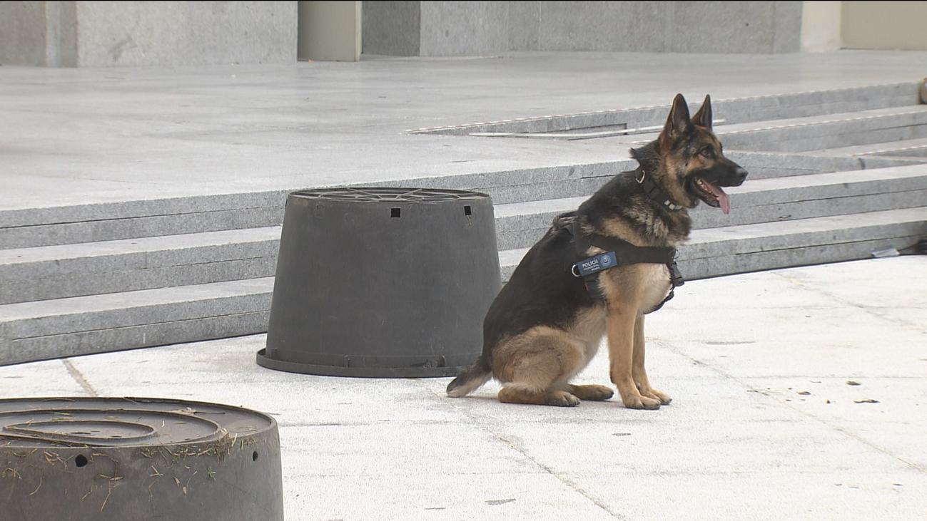 Homenaje a los perros policía por las fiestas de San Antón