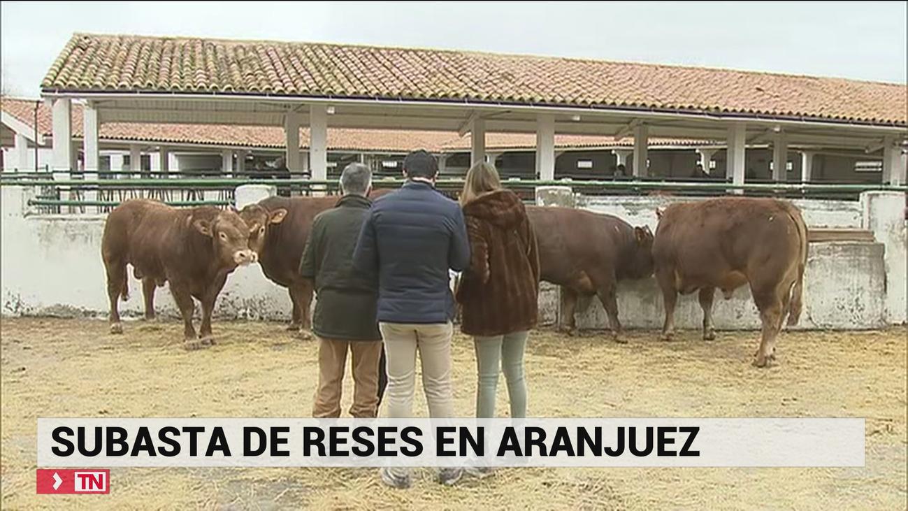 Subasta ganadera de reses madrileñas en Aranjuez