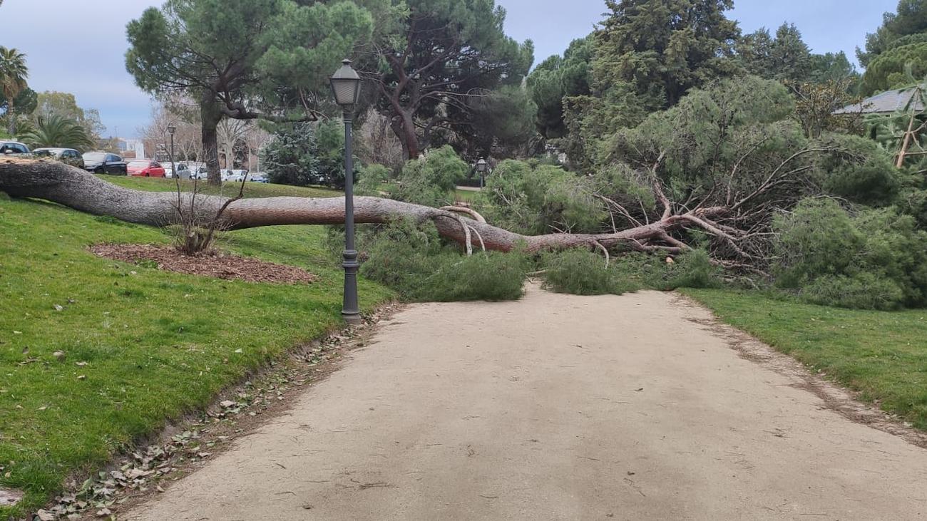 La Aemet mantiene hasta este martes el aviso por fuerte viento en Madrid
