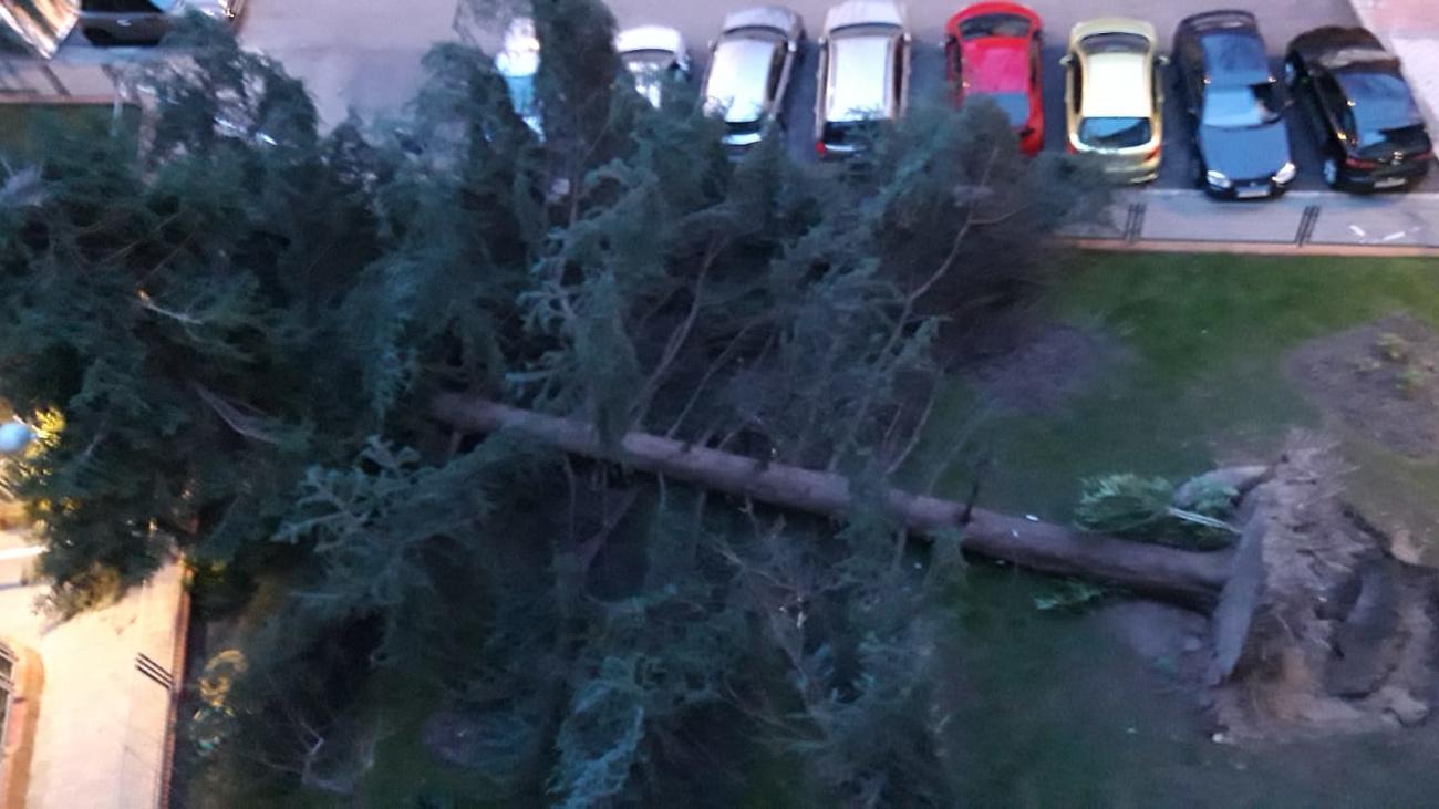 Varios árboles caídos en Madrid por culpa del fuerte viento
